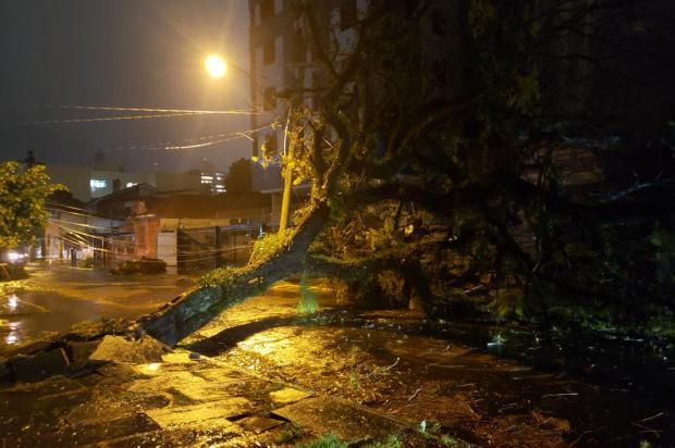 Nova queda de árvore deixa moradores sem luz pela segunda vez em menos de uma semana no Menino Deus Eduardo Paganella / Agencia RBS/Agencia RBS