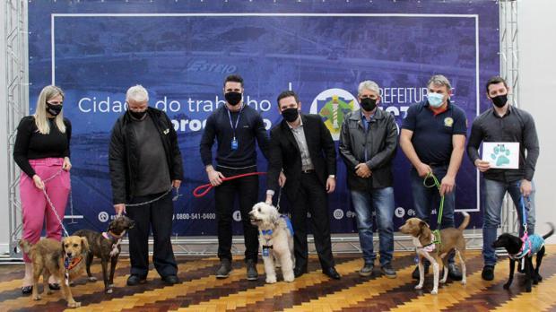 Projeto incentiva a adoção de cães acolhidos pelo Canil Municipal de Esteio Adriano Rosa da Rocha / Divulgação/Divulgação