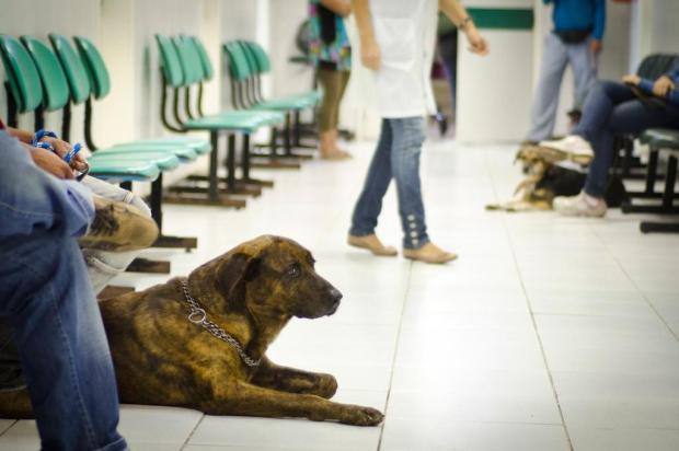 Saúde animal: saiba identificar os sintomas da cinomose Thiago Cruz / UFRGS Arquivo/UFRGS Arquivo