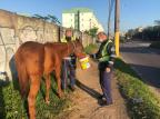 Cavalos são recolhidos pela EPTC na Avenida Bento Gonçalves, em Porto Alegre Tiago Bitencour / Agencia RBS/Agencia RBS