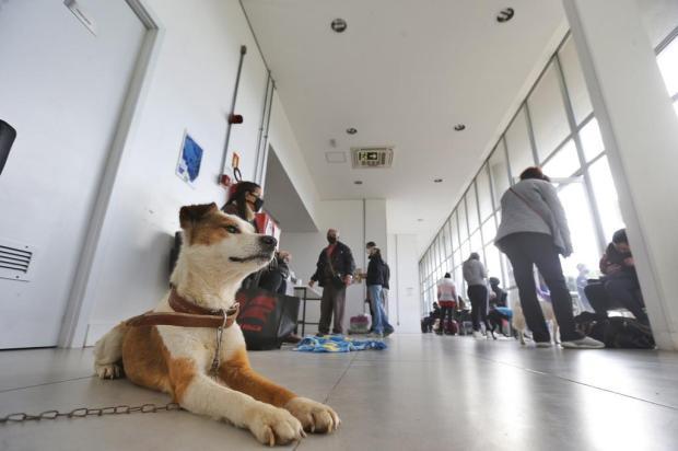 Hospital público veterinário inicia cobrança de atendimentos em Porto Alegre Lauro Alves / Agencia RBS/Agencia RBS