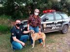 Cão comunitário de Capela de Santana é encontrado em cidade vizinha, após 20 dias de abandono Polícia Civil / Divulgação/Divulgação