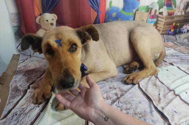 Último dos três cães comunitários que seguia desaparecido em Capela de Santana é encontrado Marciano Persson / Arquivo Pessoal/Arquivo Pessoal