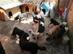 Vizinhos acolhem cães que aguardam novas famílias Ronaldo Bernardi / Agencia RBS/Agencia RBS
